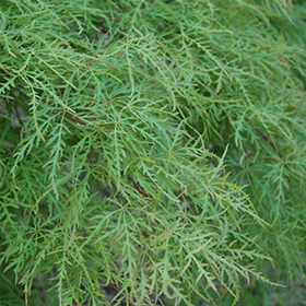 Plant Photo 5